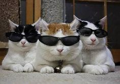 Blues Brothers... Linda, this was a related pin. I also pinned to All Things Kitty... ld