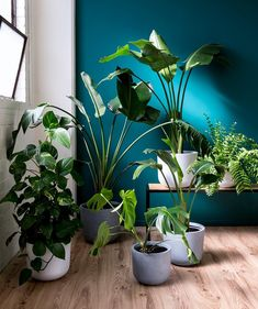 Results for: Floor Plants at Overstock