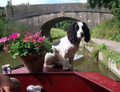Canal Boat Cocker, England by Betty Paulsen