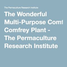The Wonderful Multi-Purpose Comfrey Plant - The Permaculture Research Institute