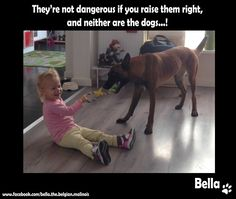 They're not dangerous if you raise them right, and neither are the dogs...!