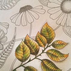 Fall leaves with colored pencils.