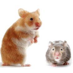 Alimentación y accesorios para roedores. Tienda de mascotas online Wakuplanet.com