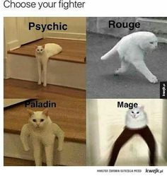 half cat long cat cat memes cats short hair mortal kombat street fighter video game arcade death match lol people organized under the new cat empire pounce choose your own adventure Funny Animal Memes, Cat Memes, Funny Animals, Cute Animals, Super Funny, Funny Cute, Really Funny, Funny Shit, Haha Funny