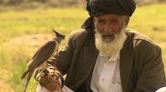 BBC News - Bird hunters 'emptying Afghan skies'