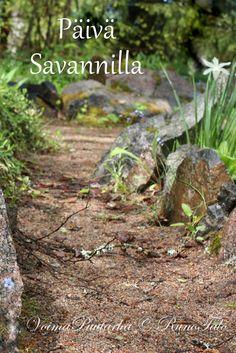 RunoTalon voimapuutarha: Voimaruno & voimakortit vko 6 - Päivä savannilla