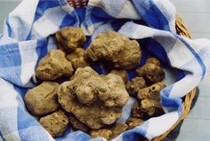 A Russian Billionaire Just Spent $95,000 on a White Truffle a world full of starving people and a fungus fetches this amount. priorities, people!