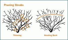 Support NC Real Estate Agents: Spring Selling Season: Help Your Clients Prepare their Home Part 2 - Pruning Trees and Shrubs Pruning Shrubs, Tree Pruning, Outdoor Landscaping, Outdoor Gardens, Trees And Shrubs, Dream Garden, Garden Path, Fruit Trees, Flower Beds