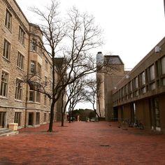 Alumni Walk. #uofg #uguelph University, Instagram Posts, Image, Community College, Colleges