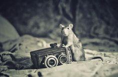 Photographer: Firko