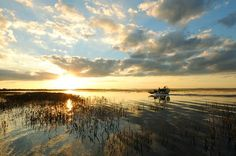 Google Image Result for http://media-cdn.tripadvisor.com/media/photo-s/02/3a/a4/3a/an-airboat-ride-is-just.jpg