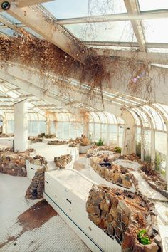 Abandoned indoor tropical pool in Rotterdam Holland.