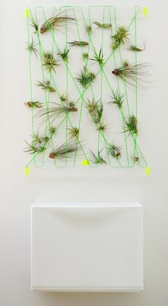Living Wall Art Vertical Garden Frames With Air Plant And