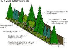 Privacy Trees, Privacy Plants, Privacy Landscaping, Outdoor Landscaping, Front Yard Landscaping, Arborvitae Landscaping, Acreage Landscaping, Evergreen Landscape, Evergreen Garden