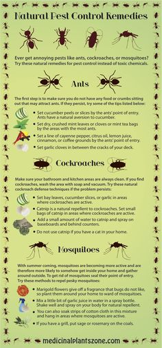 Natural Pest Control Remedies