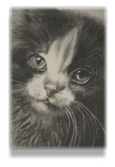 theartofcats.nl