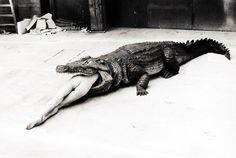 Pina Bausch's Ballet, Die Keuschheitslegende, Wuppertal, Photography by Helmut Newton, 1983