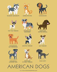 From the USA: Alaskan Malamute, Carolina Dog, Coonhound, Toy Fox Terrier, Australian Shepherd, American Water Spaniel, Chesapeake Bay Retriever, Boston Terrier, Rat Terrier, Catahoula Leopard Dog, American Pit Bull Terrier, Blue Lacy.