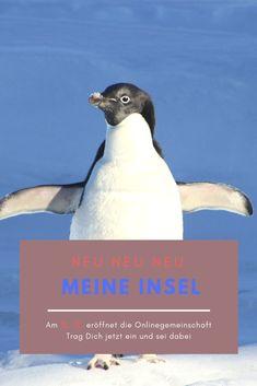 Am 15. Dezember eröffnet die Onlinegemeinschaft Meine Insel  Für liebevolle Menschen denen es einfach reicht, die so nicht mehr weitermachen wollen. Menschen die das Gefühl haben nichts geht mehr. Menschen die ihr Leben neu ausrichten wollen.  Trag Dich jetzt in die Liste ein und Du erhällst alle Informationen. Wir freuen uns auf DICH Penguins, Moving On, Community, December, Island, People, Simple, Penguin