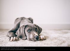 dog, looking cute