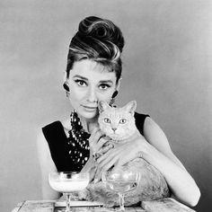 Breakfast at Tiffany'S, Audrey Hepburn, 1961 Photo Crazy Cat Lady, Crazy Cats, Audrey Hepburn Poster, Aubrey Hepburn, Celebrities With Cats, National Cat Day, Breakfast At Tiffanys, Cat Photography, Cat People