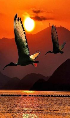 birds take to the skies at sunrise                                                                                                                                                                                 More