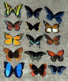 Butterfly Magnets Wholesale Lot of 15 by DougWalpusArtStudio, $19.00