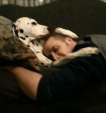Dog comforts owner