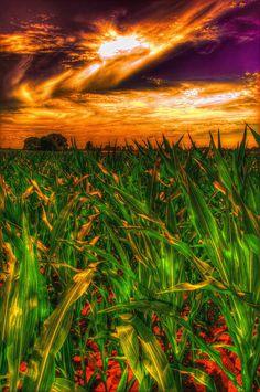 A cornfield in Sweden. Digital art / photomanipulation by Mishkin-Rayman