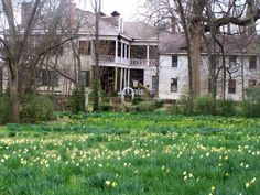 Abandoned Alabama Antebellum Homes | Daffodils at Quietdale Plantation - Huntsville