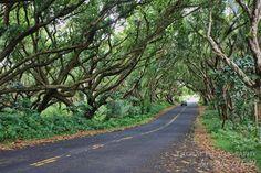 Puna - the perfect road trip