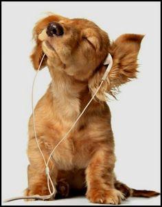 ik luister graag muziek