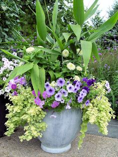 Deborah Silver planting: Ginger (hedychium), white zinnias, 3 colors of petunia, lime licorice