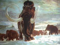 Burian - classic wolly mammoth