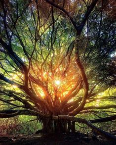 The heart of the forest in Maui, Hawaii.