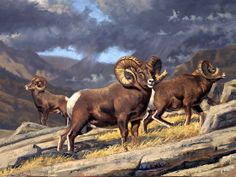 """Three Kings"" - bighorn sheep painting by BRANDON BAILEY Oil ~ 30"" x 40"""