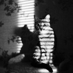 Photo *** by Dmitry Zherebtsov on 500px
