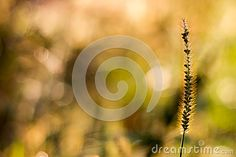 Photo about Summer floral bokeh with grass. Image of bright, field, macro - 59116767 Bokeh, Grass, Bright, Celestial, Stock Photos, Floral, Summer, Outdoor, Image