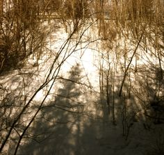 Sunlight and shadows in sepia