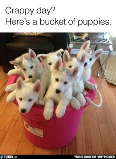 Crappy day? Here's a bucket of puppies (Funny Animal Pictures) - #bad day #dog #puppy