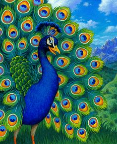 Peacock (by Scott Gustafson)