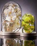 Glass Dome ~ Cloche with White Ceramic Base Sm
