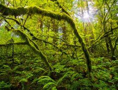 Radiant Forest – Columbia River Gorge, Washington