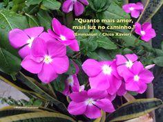 """""""Quanto mais amor, mais luz no caminho."""" (Emmanuel / Chico Xavier)  Do Livro: Sementes do Evangelho"""