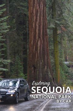 15 Tips for Exploring Sequoia National Park by Car - Calculated Traveller