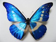 Morpho Butterfly, Blue Butterfly, Watercolor Butterfly Tattoo, Butterfly Tattoos For Women, Insects, Wings, Wallpaper, Flowers, Enamels