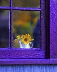 "608 Beğenme, 3 Yorum - Instagram'da design-dautore.com (@design_dautore): ""#goodmorning #violet #yellow and #purple #windows #design #designdautore"""
