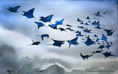 CINQUANTE DEUX RAIES MANTAS- 52 manta rays - Watercolors on paper  by Pascal…
