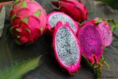 Dragon Fruit - St Croix, USVI