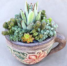 Succulent Teacup Garden